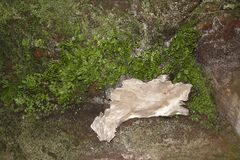 Roches avec la fougère et la mousse couvertes et un petit bois seul de morceau photo stock