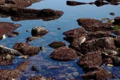 Roches avec les algues rouges à marée basse. photos libres de droits
