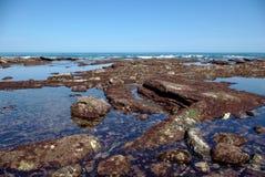 Roches couvertes d'algues rouges sur la côte atlantique photos libres de droits
