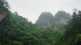 Roches couvertes de Forest In The Rain In tropical luxuriant vert le brouillard banque de vidéos