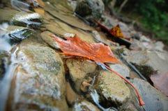 Roches d'Autumn Leaves et de rivière Photographie stock