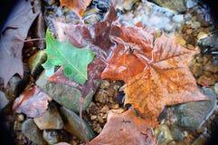 Roches d'Autumn Leaves et de rivière Photos stock