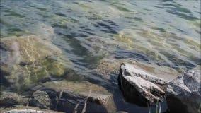Roches dans l'eau banque de vidéos