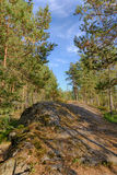 Roches dans la forêt d'été Image stock