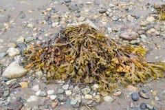 Roches de mauvaise herbe et de plage de roche sur le bord de la mer Photographie stock libre de droits
