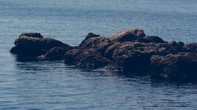 Roches en mer, Crète Grèce photos stock