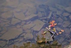 Roches en rivière Images stock