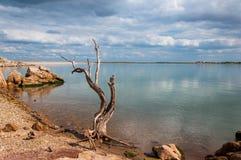 Roches et arbre de lac images libres de droits