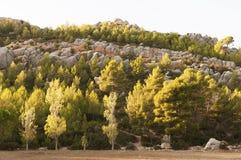 Roches et arbres Images libres de droits