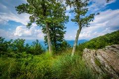Roches et arbres chez Jewell Hollow Overlook dans le ressortissant de Shenandoah image libre de droits