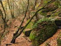 Roches et chemin dans la forêt Photos libres de droits