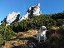 Roches et chien Photographie stock