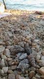 Roches et coquilles de mer sur le rivage à l'ombre d'arbre photo stock
