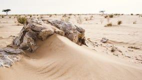 Roches et désert Photos stock
