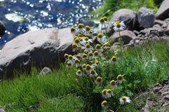 Roches et fleurs Photo libre de droits