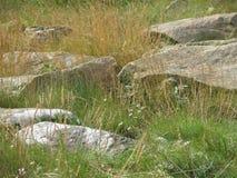 Roches et herbe Image libre de droits