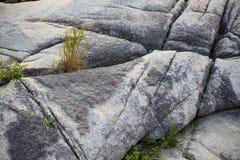 Roches et herbe Photo libre de droits
