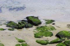 Roches et sable moussus au bord de mer photographie stock libre de droits