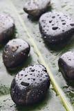 Roches humides de fleuve sur une lame verte Photos libres de droits