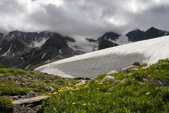 Roches, neige et fleur. Photo libre de droits