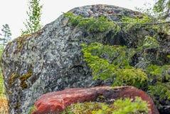 Roches rouges dans la forêt en Norvège Photos libres de droits