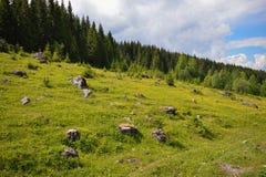 Roches scéniques sur l'herbe près de la forêt Photographie stock