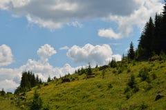 Roches scéniques sur l'herbe près de la forêt Image stock