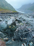 Roches sous la pluie en vallée de glacier de Fox, Nouvelle-Zélande Photographie stock libre de droits