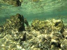 Roches sous-marines Photos libres de droits