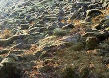 Roches tombées, Eagle Creek, gorge de Colombie, Orégon Image libre de droits