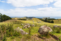 Roches volcaniques sur un flanc de coteau vert Images stock
