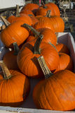Rochester Farmer Market Pumpkins. At last day in the fall. Pumpkins are in a white crate royalty free stock photography