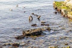 Rochoso e penhascos no mar calmo imagem de stock