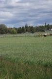 Rociadores automotores de la irrigación Fotos de archivo