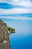 Rock. Growing pine on a rock Aj-Petro stock images