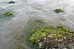 Rock with algae in the sea Royalty Free Stock Photos