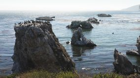 Rock and arches in the ocean, and flock of birds. Colony of brown pelicans, cormorants and seagulls. stock video
