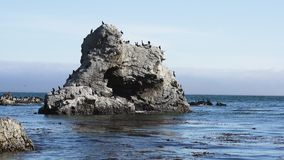 Rock and arches in the ocean, and flock of birds. Colony of brown pelicans, cormorants and seagulls. Large group of animals, animals in the wild, California stock video footage