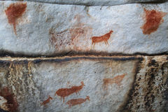 Rock art in the Cederberg Mountains. Bushman rock art of animals on granite stone in the Cederberg Mountains, Western Cape, South Africa Stock Photography