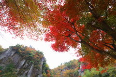 Rock and autumn leaves Stock Images