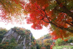 Rock and autumn leaves Royalty Free Stock Photo