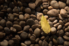 Rock background. Brown stone. Stock Images