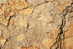 Rock background with fossils Stock Photography