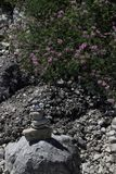Rock balancing Stone stacking near doing bush. Artfully arranged stones in sunlight near a bush covered in pink flowers Royalty Free Stock Photo