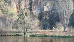 Rock and bare trees on the bank of the river Southern Bug. Ukraine, Vinnitsa stock video