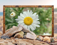 Rock on the beach with beautiful daisy flower picture frame and Stock Photo