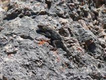 Rock Royalty Free Stock Image