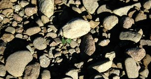 Rock Bed Royalty Free Stock Photo
