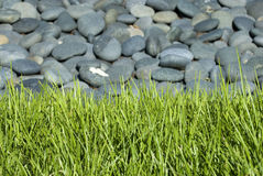 Rock bed with grass Royalty Free Stock Photos