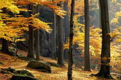 Rock in beech forest Stock Photography